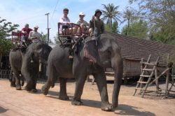 buon me thuot ballade à dos d'éléphant