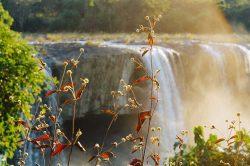 Nature et cascade baignées dans le soleil