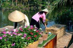 Vendeuses de fleurs à Can Tho