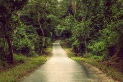 Cuc Phuong route dans la forêt