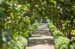 Allée faite d'arbres et arbustes à Hue
