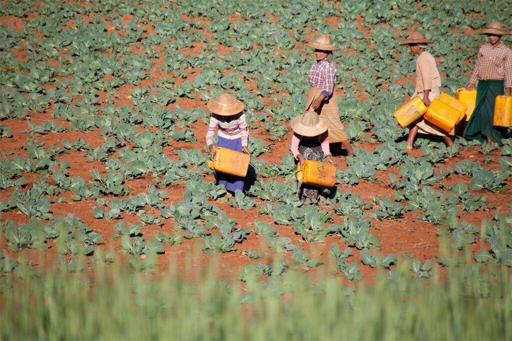 Femmes birmanes arrosant les plantations