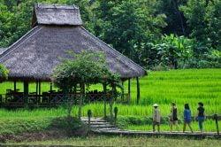 kamu lodge rizières et cabanes en bois avec touristes