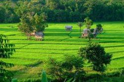 kamu lodge rizières et cabanes en bois