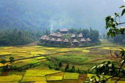 mai chau village au milieu des champs