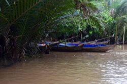 Barques sur le Mékong et nature verdoyante