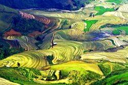 La vallée de Mu Cang Chai et ses rizières