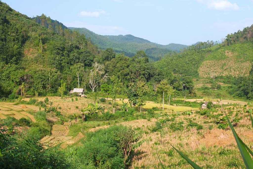 muang la campagne et paysages vert