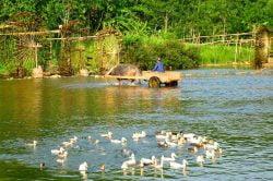pu luong rivière avec charrette à bœuf