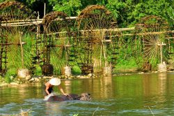 pu luong roue à eau et bœuf dans la rivière avec un paysan