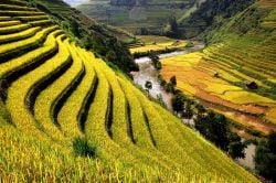 sapa rizières en terrasse Vietnam