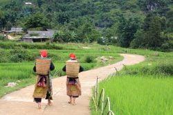 sapa, femmes Hmong sur la route entre deux rizières