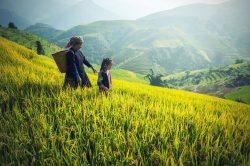 Sapa, Vietnam, femme Hmong dans les rizières