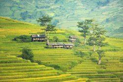 sapa rizières en terrasse avec cabanes en bois Vietnam
