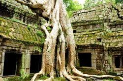 Racines d'un arbre envahissant un temple en pierre