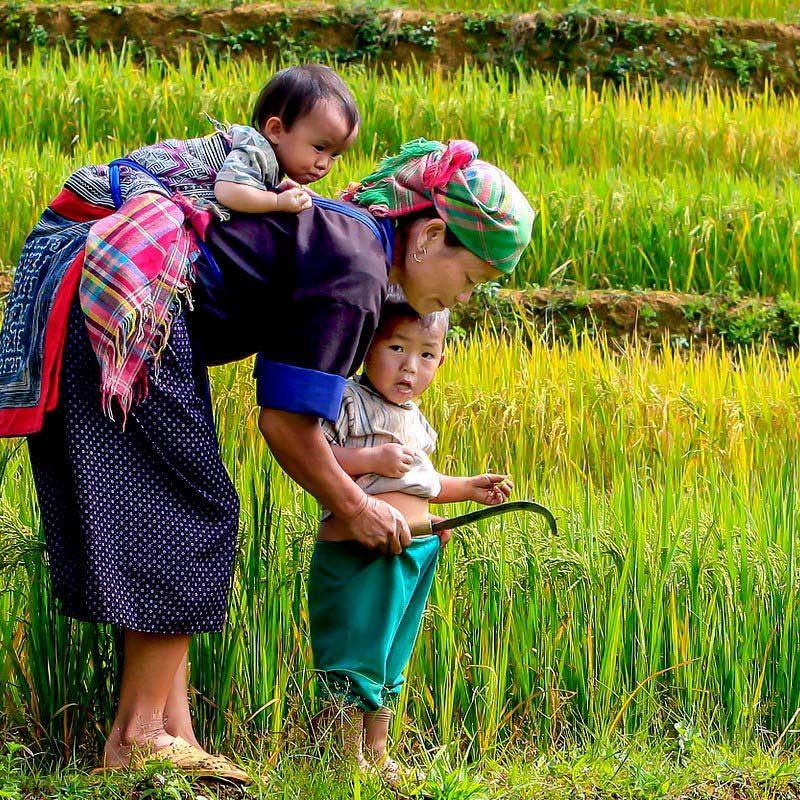 Ethnies du Nord Vietnam famille dans les rizières