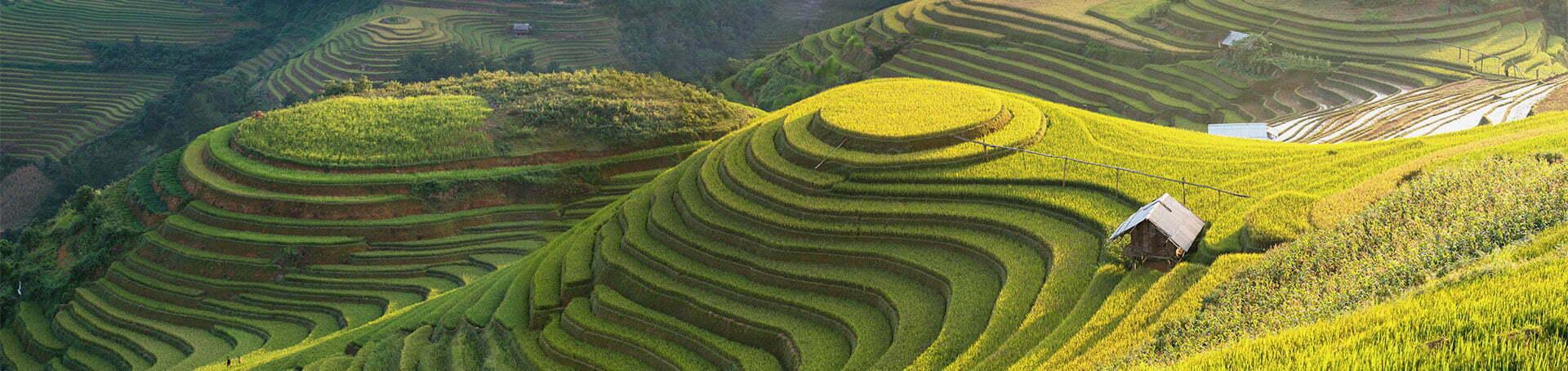 rizières en terrasse de Sapa, Vietnam