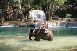 tad sae éléphant devant la cascade