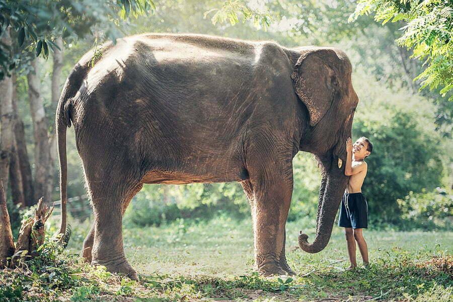 enfant cambodgien caressant un éléphant dans la jungle, Cambodge