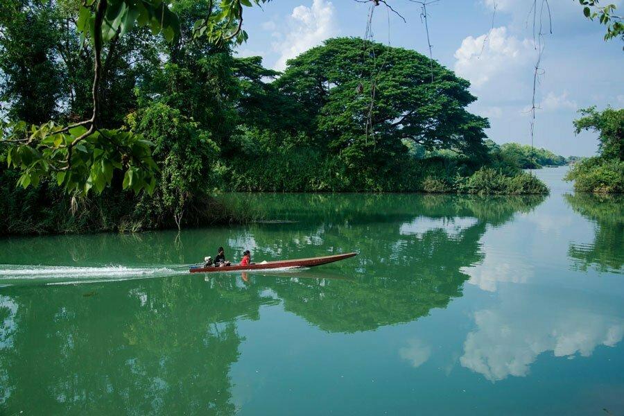 Bateau motorisé sur l'eau et foret verte et dense