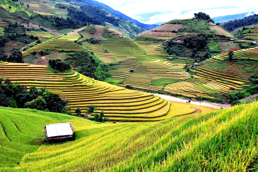 rizières en terrasse à Mu Cang Chai, Vietnam