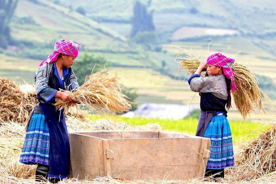 mu cang chai femmes chargeant de la paille