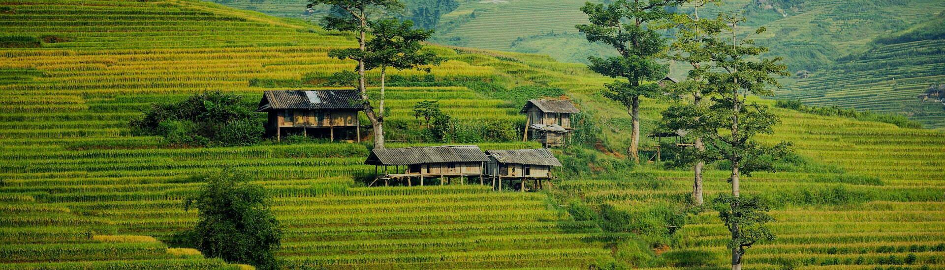 rizières et paysages de montagnes au Vietnam