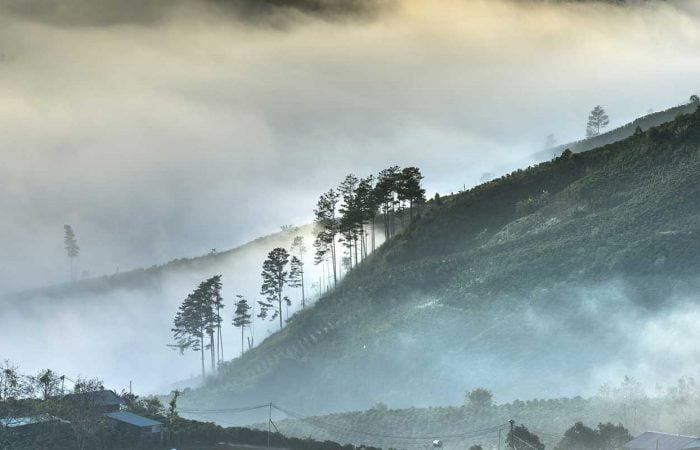 forêt et montagne au Vietnam