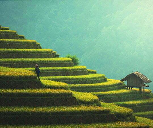 rizières en terrasses avec cabane en bois, Vietnam