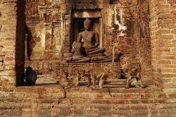temple avec singes Lopburi Thailande