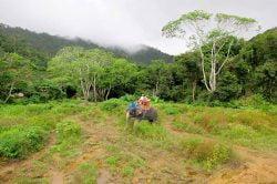 Mu Ko Lanta parc national avec elephant Thailande