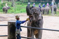 Maison naturelle des éléphants Chiang Mai