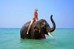 ballade à dos d'éléphant dans l'eau Thailande