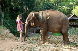 elephant et jeune fille dans un sanctuaire pour éléphant chiang mai Thailande
