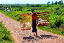 homme portant des paniers birmanie