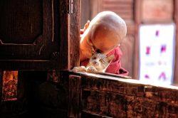 enfant et chat birmanie