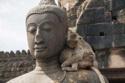 buddha avec singe sur l'épaule Lopburi Thailande