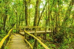 pont en bois dans le parc national thailande