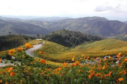 Pai champ de fleurs Thailande