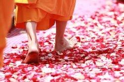 moine marchant sur des pétales thailande