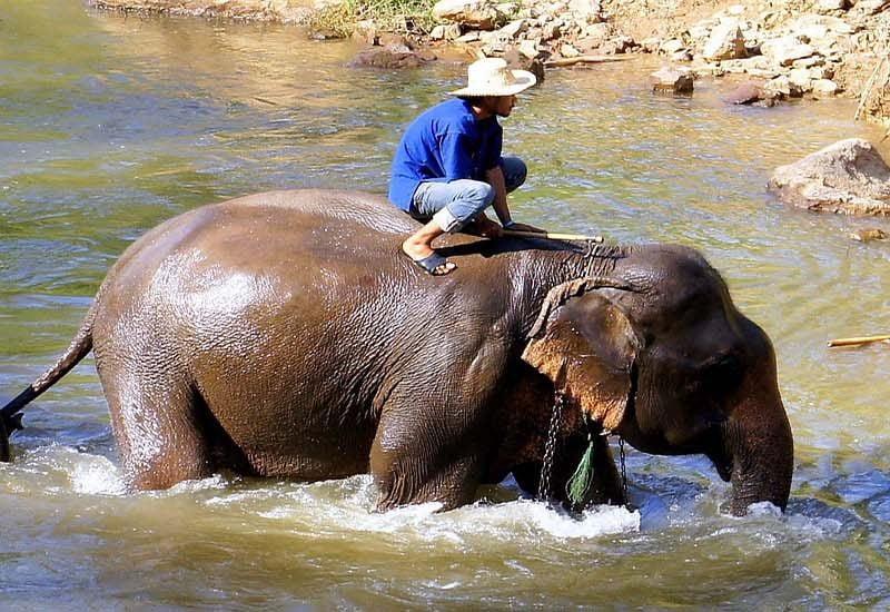 éléphant traversant la rivière Thailande