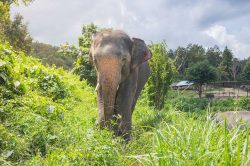 elephant au village Lahu Thailande